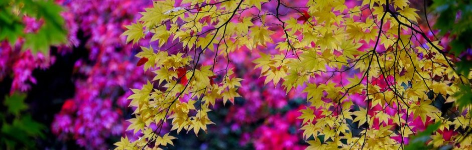 5 Best Places to See Autumn Leaves in Aomori