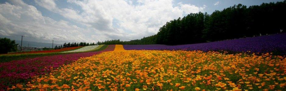 7 Days in Hokkaido Summer Itinerary (July/August)