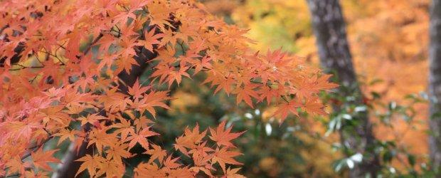 4-Day Kyoto Autumn Itinerary