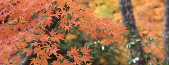 4-Day Kyoto Autumn Itinerary