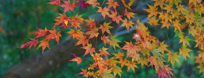 10 Best Things to Do in Hokkaido in Autumn