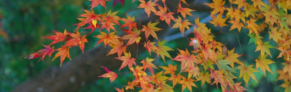 10 Best Things to Do in Hokkaido in Autumn