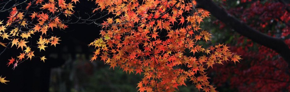 4 Famous Places to See Autumn Leaves in Nara