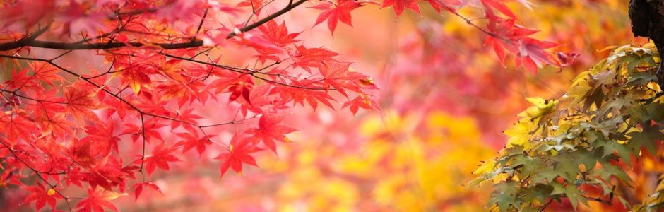 2019 Japan Autumn Foliage Forecast