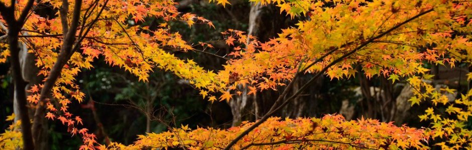 12 Best Places to See Autumn Leaves in Japan