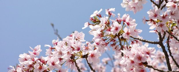 One Day in Kyoto Spring Itinerary