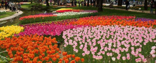 10 Best Flower Festivals around Tokyo in Spring