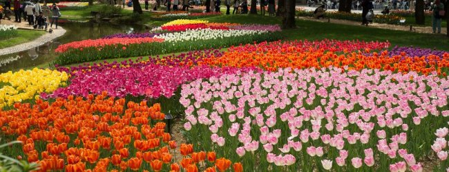 10 Best Flower Festivals around Tokyo in Spring