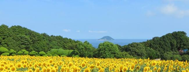 10 Best Things to do in Fukuoka in Summer
