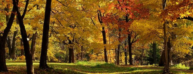 10 Best Things to Do in Sapporo in Autumn