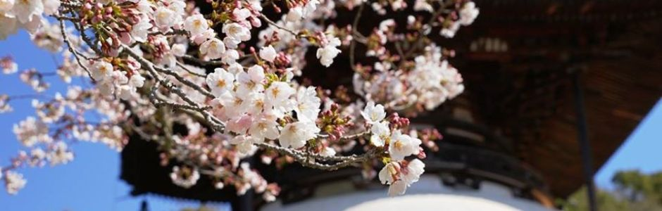 4 Best Places to See Cherry Blossom in Wakayama