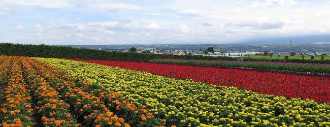 10 Best Flower Fields in Hokkaido