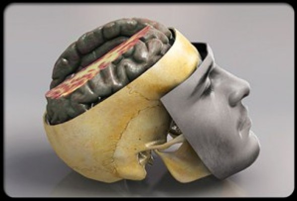 concussions-and-brain-injuries-s1-photo-of-brain-anatomy