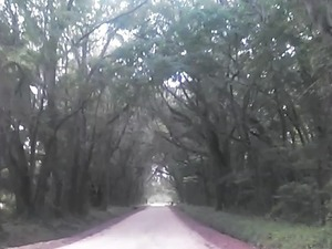 300x225 Solid canopy, in Boring Pond Road, by John S. Quarterman, 13 April 2015