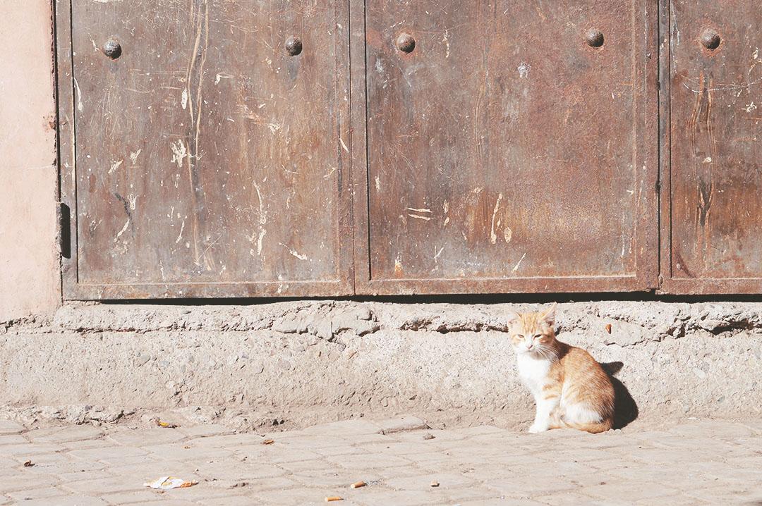 24_24h_marrakech_que_faire_cafe_des_epices