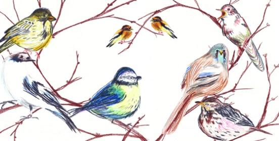 vogels takkenpsd