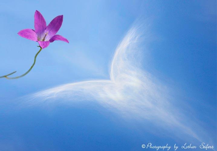 Wolke mit einer blauen Glockenblume Fotos und Bilder