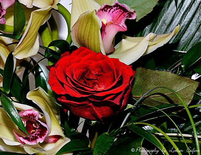 Blumenbilder und Bilder von Blten Blumen und Blten