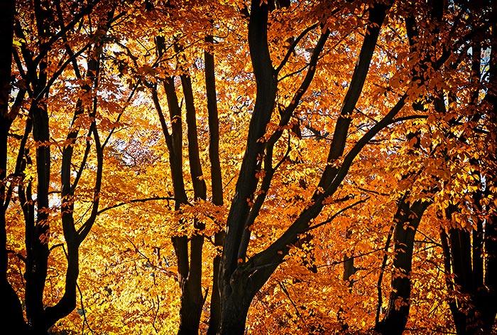 Herbstbilder verschnern uns die letzten warmen Sonnentage im Herbst Herbstbilder
