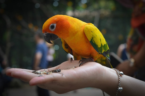 parrots-1149970_1920