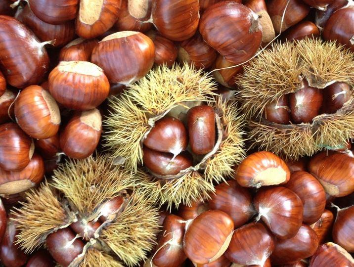 chestnuts of Provence