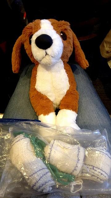 Formation de premiers secours canin et félin - La Box Naturelle 1