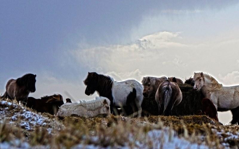 Parc national de Thingvellir et Selfoss – Islande