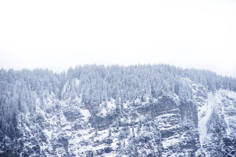 bavière en hiver sapins enneigés
