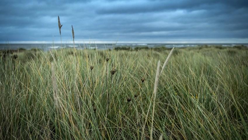 Malahide Irlande herbes mer