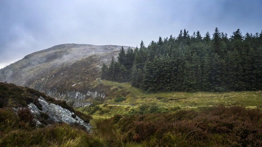 Lac Lough Tay sapins montagnes Wicklow Mountains