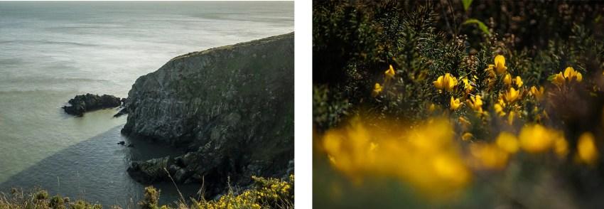 Howth falaises fleurs détail