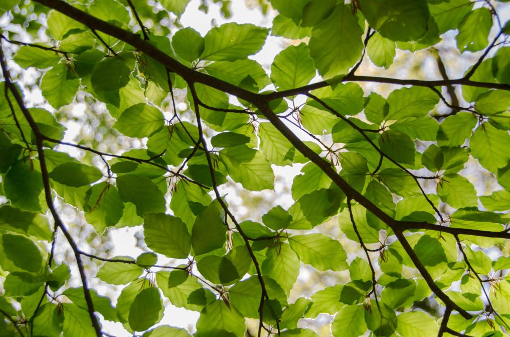 Deco Branche D Arbre Awesome With Deco Branche D Arbre