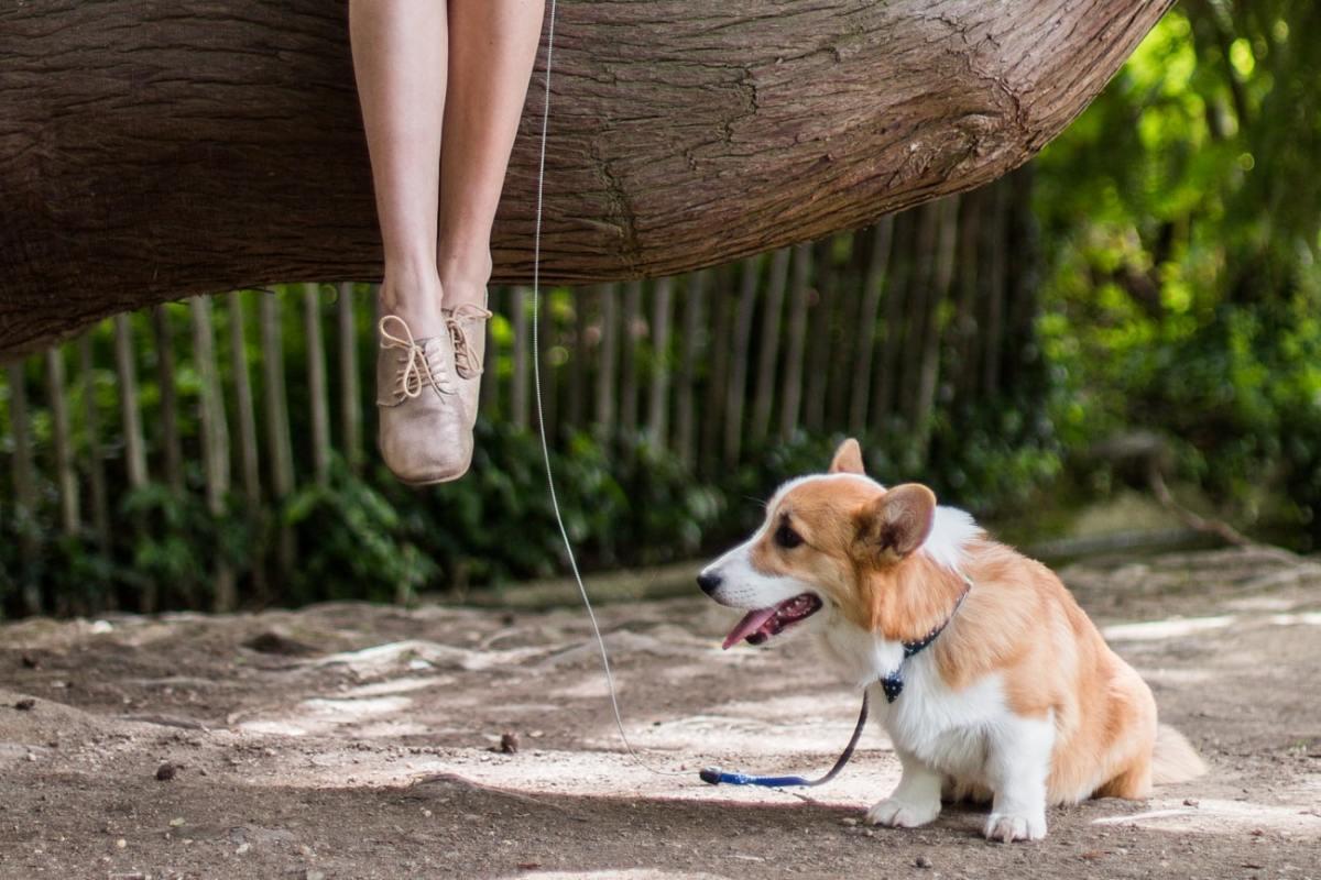 Un chien en appartement ? - le quotidien avec Newton : conseils, premiers mois...