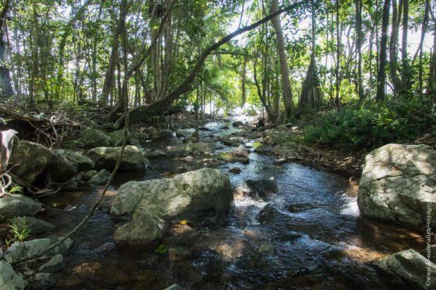 rainforest cape tribulation qld