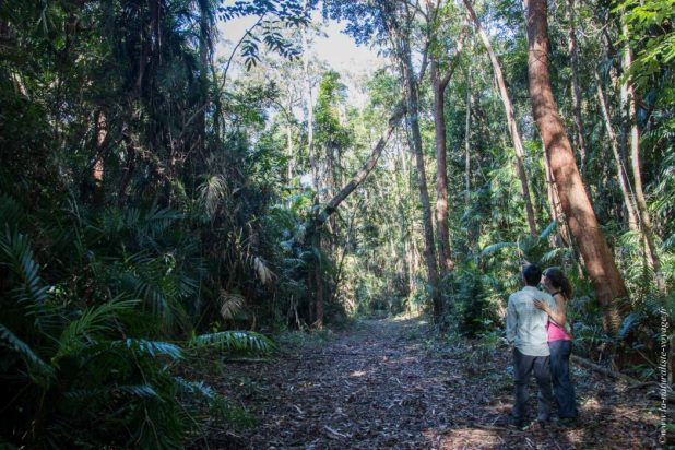 rainforest Kuranda