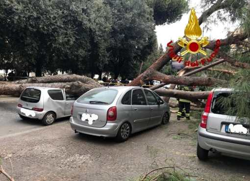 "< img src=""https://www.la-notizia.net/albero"" alt=""albero"""