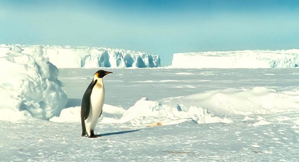 La_marcia_dei_pinguini
