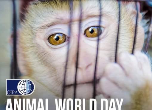 Animal World Day