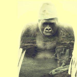 Gorilla, double exposition 01. Crédit Photo Alexandre De Vries, La retouche photo