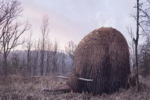 """Un jour, un artiste : Laure Fauvel """"Phacoche"""". La retouche photo, le blog."""
