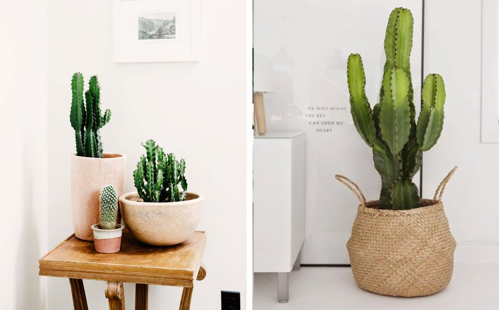inspiration-deco-plantes-vertes-cactus-new2