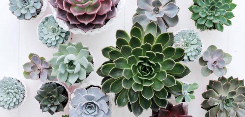 plante grasse depolluante