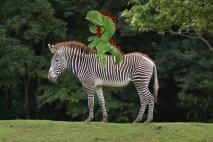 nina-et-zebre
