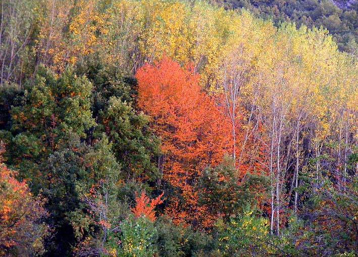 El otoño en Labaniego