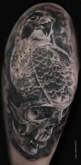 Hawk - O - Skull 2014