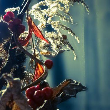 Dead Flowers Arrangement by Ka L-O-K