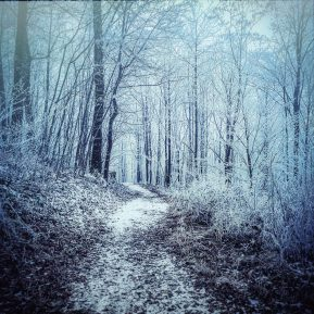 Forest by Ka L-O-K