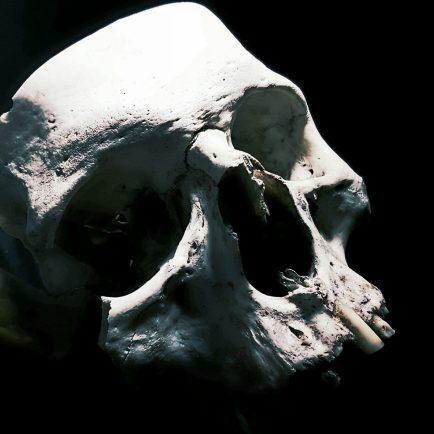 Skull by Guy Labo-O-Kult