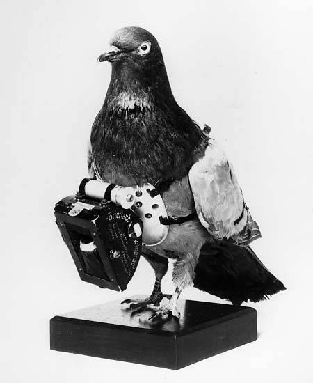 pigeon camera photographie aerienne 06 Des pigeons photographes pour la reconnaissance aérienne