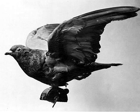 pigeon camera photographie aerienne 07 Des pigeons photographes pour la reconnaissance aérienne